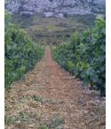 Muscat du Cap Corse